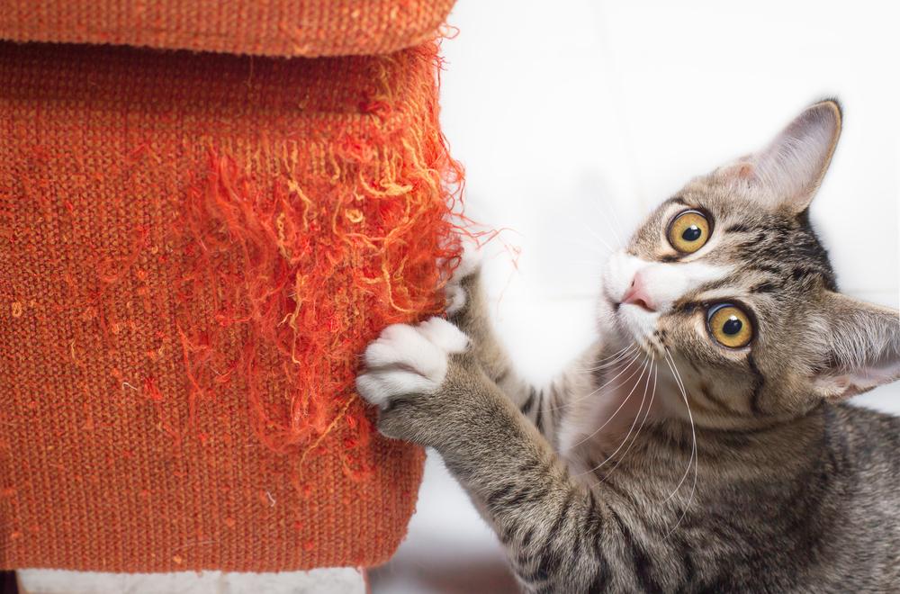 沙發材質貓抓皮